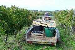 Afvoeren naar de wijnmakerij