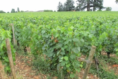 De bijbehorende wijngaarden.