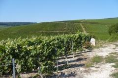 Wijngaarden in de Marne-vallei (zie de kalkbodem)