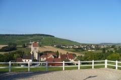 Wijngaarden in de Marne-vallei