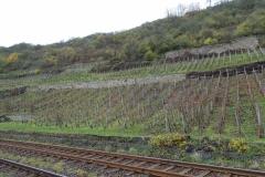 Nahe; onderaan de beroemde Bastei-helling. Wijngaard van Gut Hermannsberg.