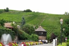 Bijna elk dorp heeft zijn eigen lokale wijnberg. Hier bij de entree tot Dambach-la-Ville.
