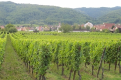 Maar ook zat wijngaarden in het vlakke land