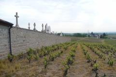 Julienas, wijn naast het kerkhof