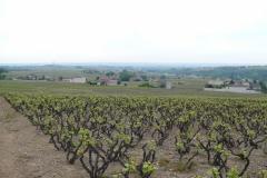 Julienas, zogenaamde bush-vines plantwijze (ongeleid)