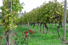 De bijbehorende wijngaard