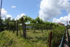 Provincie Minho, herkomstgebied van de Vinho Verde.
