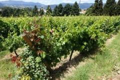 De oorspronkelijke Mateus wijngaard. De rosé komt nu ergens anders vandaan.