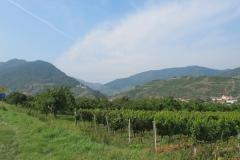 Wijngaarden bij Rust.