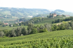 Zicht op de wijngaarden van Barolo.