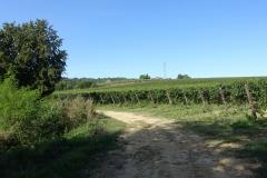 Wijngaarden in het Chianti Classico gebied.